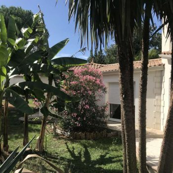 vegetation-luxuriante-chambres-dhotes-casa-upupa-vendee